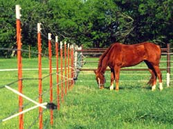 FARM SUPPLY STORE - ELECTRIC FENCE, DOG, CHARGER, HORSE